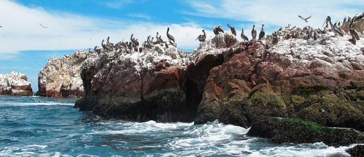 islas-ballestas-reserva-nacional-de-paracas